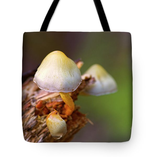 Tote Bag featuring the photograph Fungi On A Stump by Sharon Talson