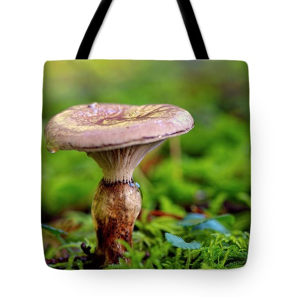 Tote Bag featuring the photograph Fungus  by Sharon Talson