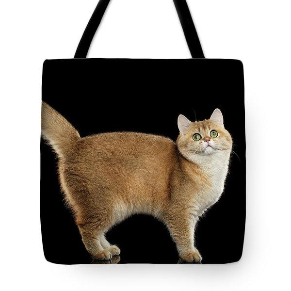 Funny British Cat Golden Color Of Fur Tote Bag