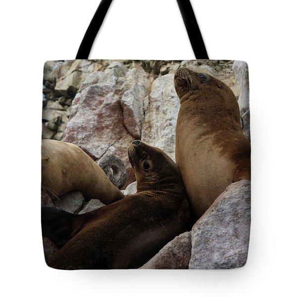 Fur Seals On The Ballestas Islands, Peru Tote Bag by Aidan Moran