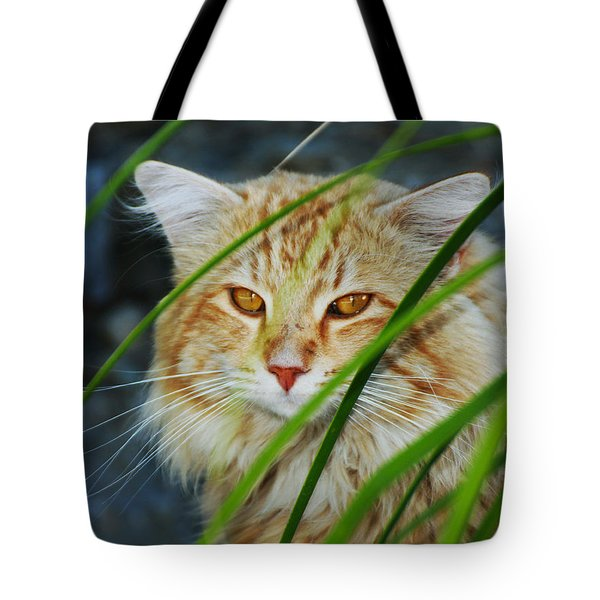 Tote Bag featuring the photograph Furtive Feline by Richard Stephen
