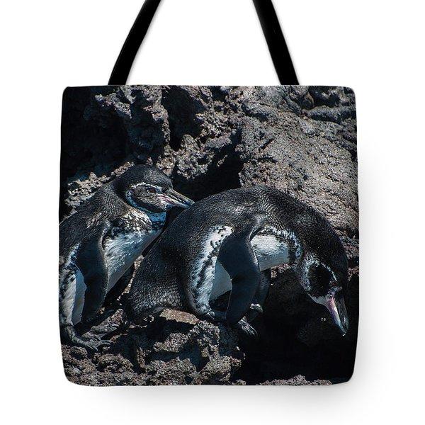 Galapagos Penguins  Bartelome Bartholomew Island Galapagos Islands Tote Bag