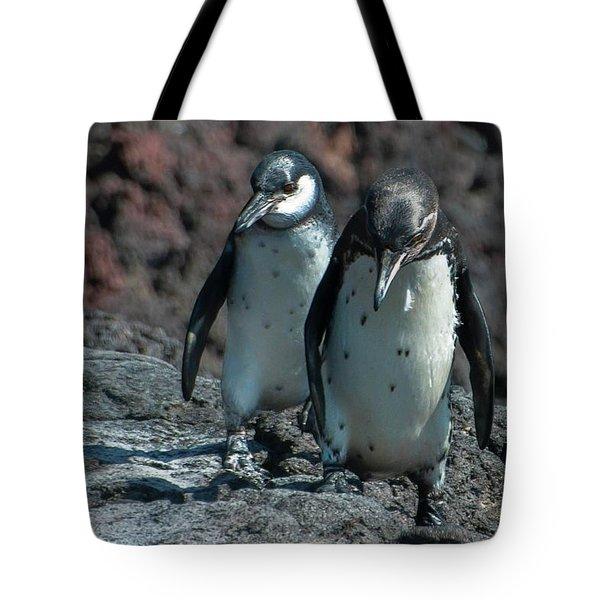Galapagos Penguins  Bartelome Island Galapagos Islands Tote Bag