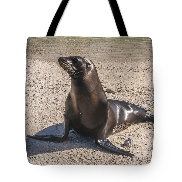 Galapagos Sea Lion Tote Bag