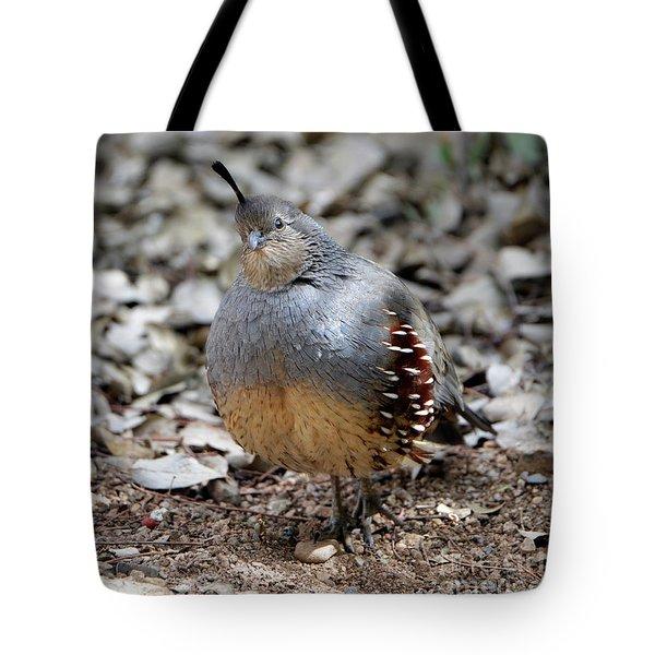 Gambel's Quail Tote Bag
