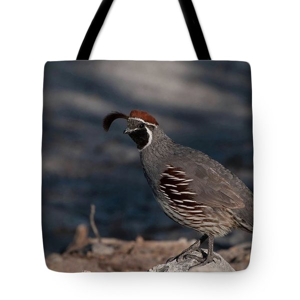 Gambel's Quail Tote Bag by Martina Thompson