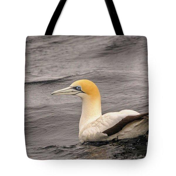 Gannet 5 Tote Bag