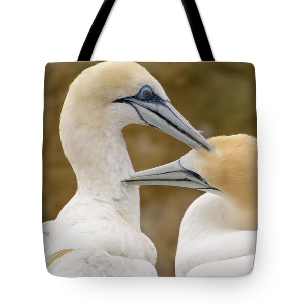 Tote Bag featuring the photograph Gannet Pair 1 by Werner Padarin