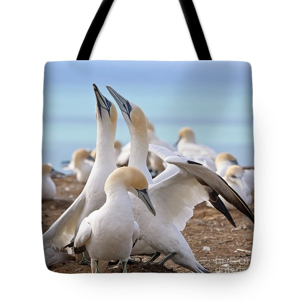 Tote Bag featuring the photograph Gannets by Werner Padarin