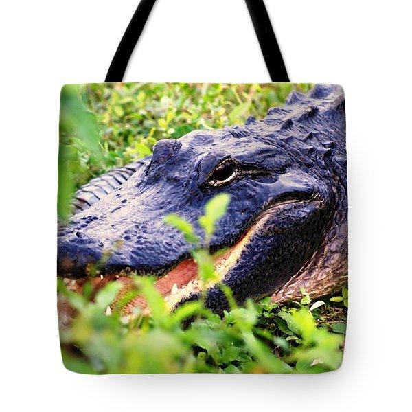 Gator 1 Tote Bag by Marty Koch