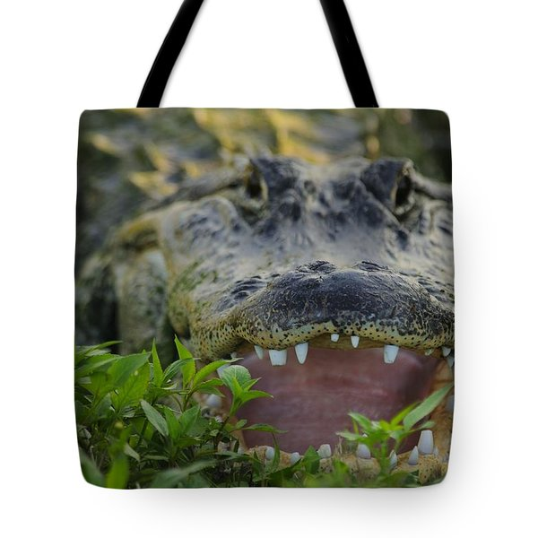 Tote Bag featuring the photograph Gator With Worn Teeth by Bradford Martin
