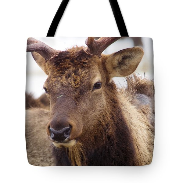 Tote Bag featuring the photograph Gaze From A Bull Elk by Jeff Swan