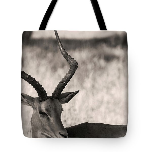Tote Bag featuring the photograph Gazella by Stefano Buonamici