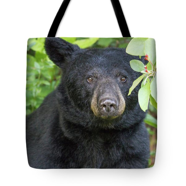 Gazing Black Bear Tote Bag