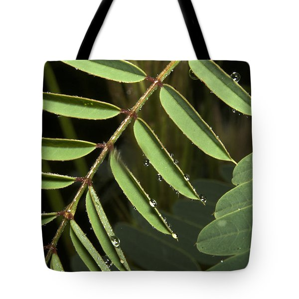 Gentle Morning Dew Tote Bag by Karen Musick