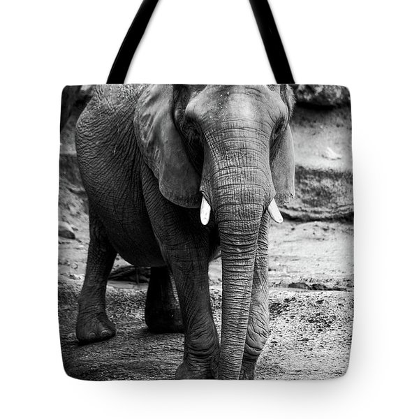 Tote Bag featuring the photograph Gentle One by Karol Livote