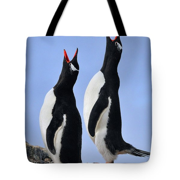 Gentoo Love Song Tote Bag by Tony Beck
