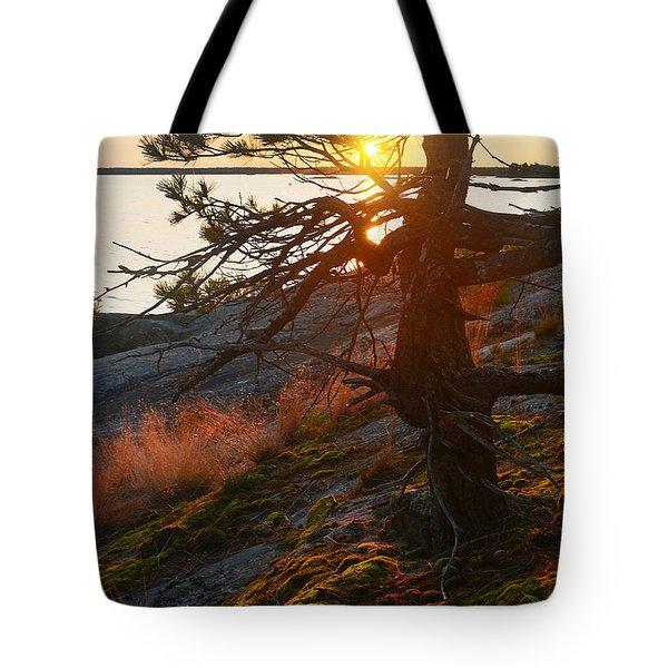 Georgian Bay Sunrise Wild Grass Tote Bag
