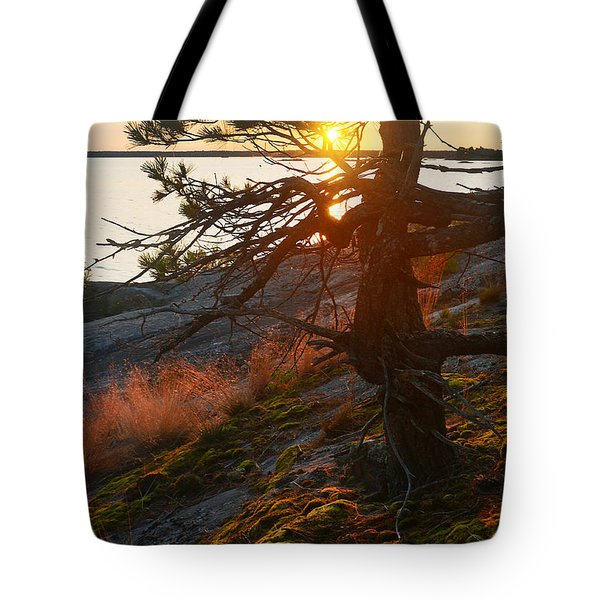 Georgian Bay Sunrise Wild Grass Tote Bag
