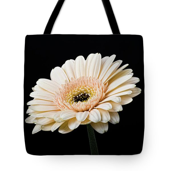 Tote Bag featuring the photograph Gerbera Daisy On Black II by Clare Bambers