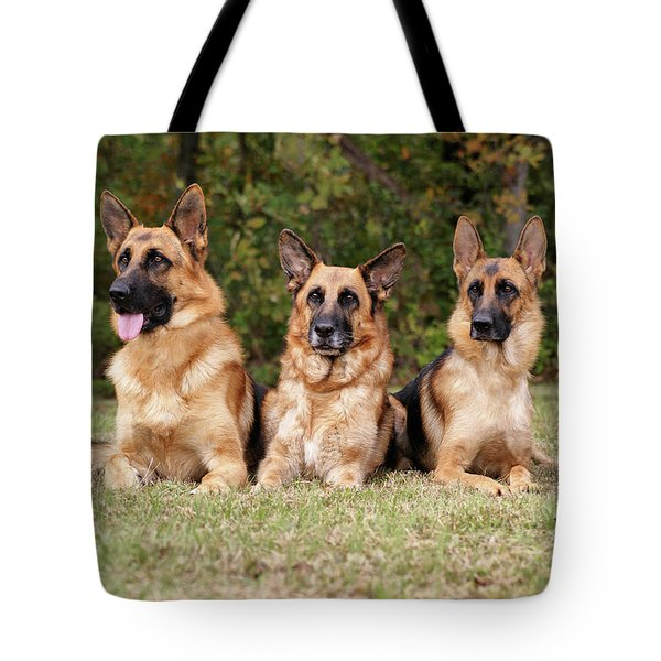 German Shepherds - Family Portrait Tote Bag by Sandy Keeton