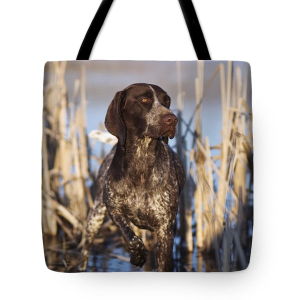 German Shorthair On Point -  D000897 Tote Bag