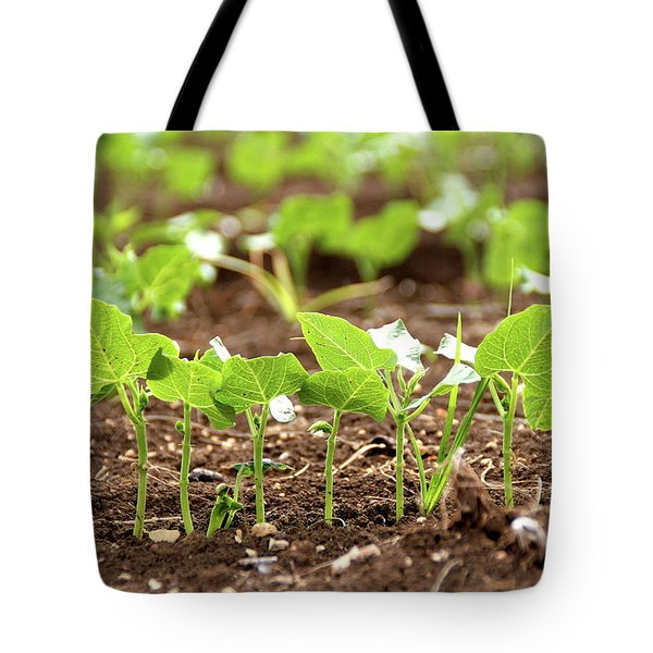 New Sprouts In The Promised Land Tote Bag by Yoel Koskas
