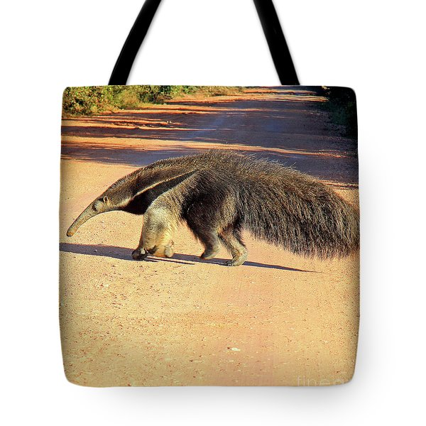 Giant Anteater Crosses The Transpantaneira Highway In Brazil Tote Bag