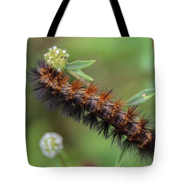 Giant Leopard Moth Caterpillar Tote Bag