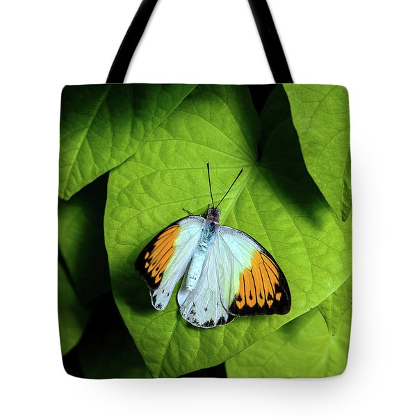 Tote Bag featuring the photograph Giant Orange Tip Butterfly by Tom Mc Nemar