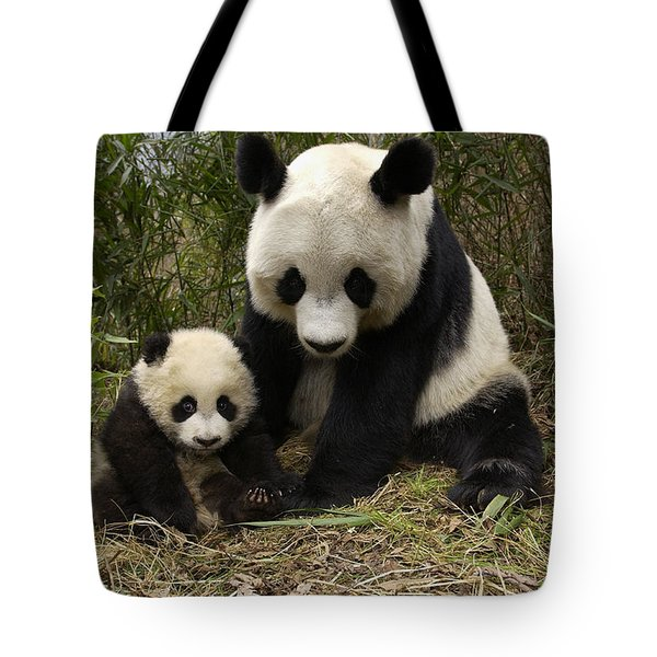 Tote Bag featuring the photograph Giant Panda Ailuropoda Melanoleuca by Katherine Feng