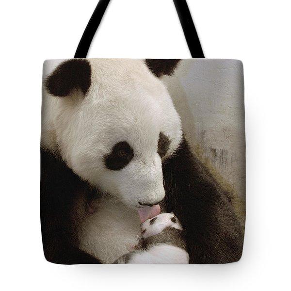 Giant Panda Ailuropoda Melanoleuca Xi Tote Bag by Katherine Feng