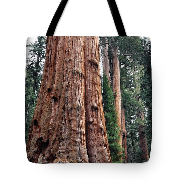 Tote Bag featuring the photograph Giant Sequoia II by Kyle Hanson