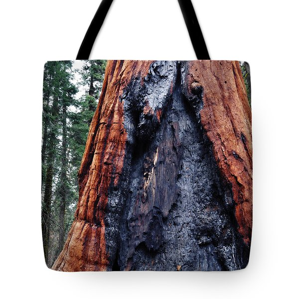 Tote Bag featuring the photograph Giant Sequoia by Kyle Hanson