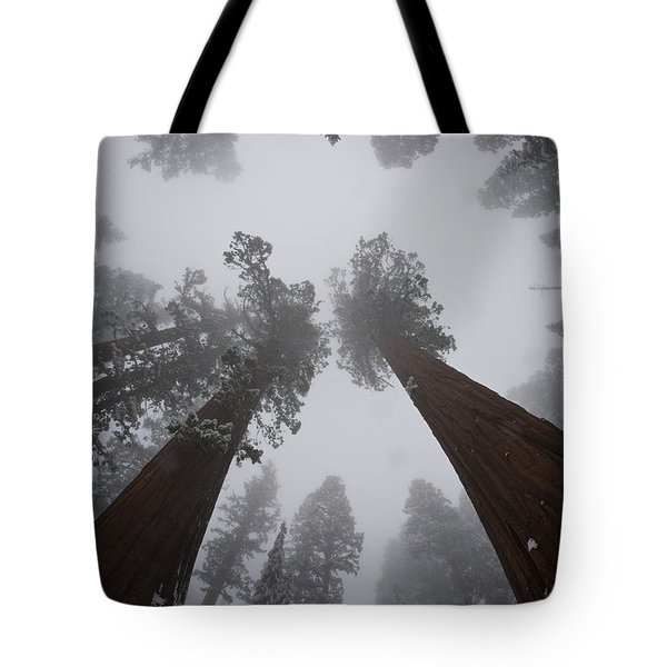 Giant Sequoias Tote Bag by Gregory G. Dimijian, M.D.