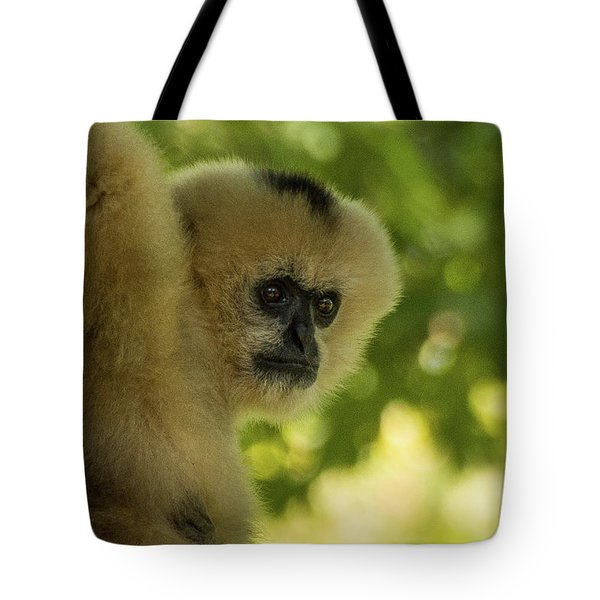 Gibbon Portrait Tote Bag