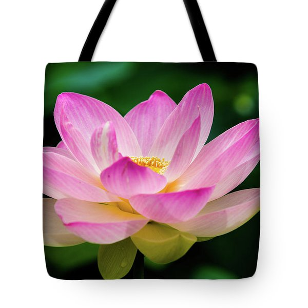 Tote Bag featuring the photograph Gigantic Lotus Red Lily by Dennis Dame
