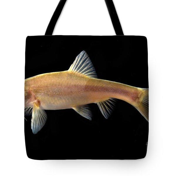Gii Golden Line Barbel Tote Bag