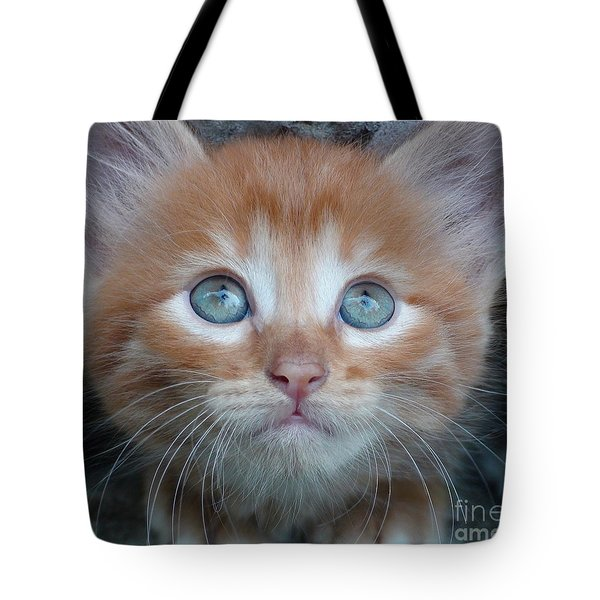 Ginger Kitten With Blue Eyes Tote Bag by Sergey Lukashin