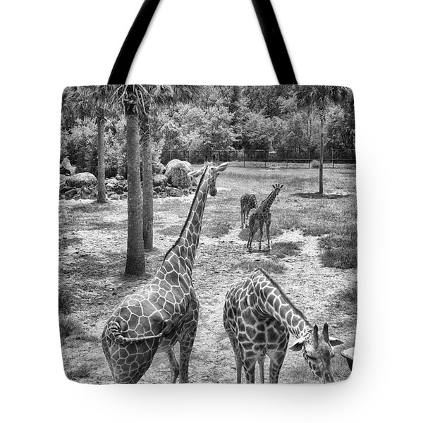 Tote Bag featuring the photograph Giraffe Reticulated by Howard Salmon