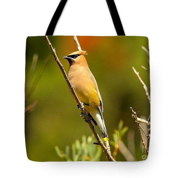 Glacier Cedar Waxwing Tote Bag by Adam Jewell