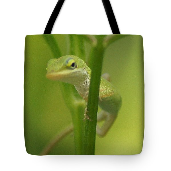 Glaring Lizard Tote Bag by Paul  Wilford