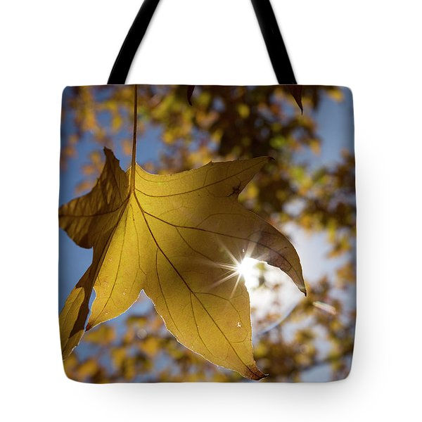 Glimmers Of Autumn Tote Bag by Sue Cullumber