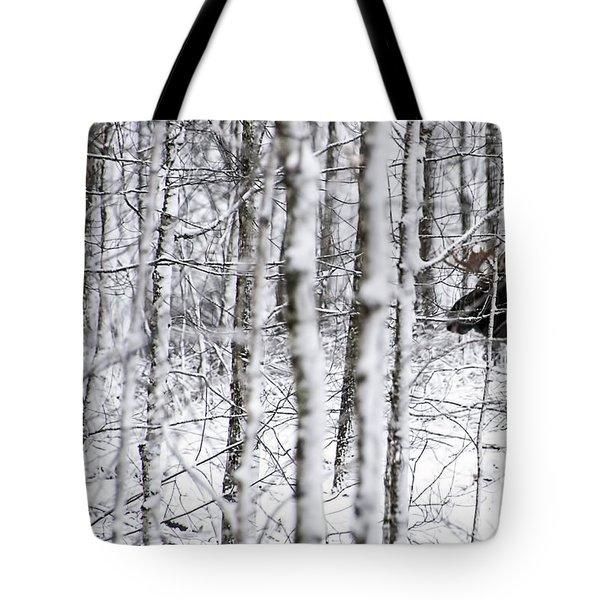 Glimpse Of Bull Moose Tote Bag