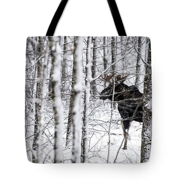Glimpse Of Bull Moose Tote Bag