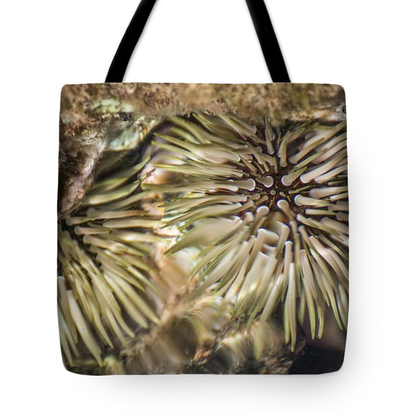Tote Bag featuring the photograph Glistening by Colleen Coccia