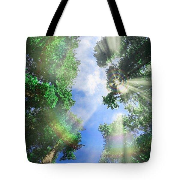 Glory Amongst Redwoods Tote Bag