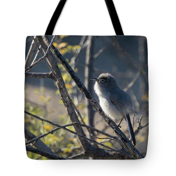Gnatcatcher Tote Bag