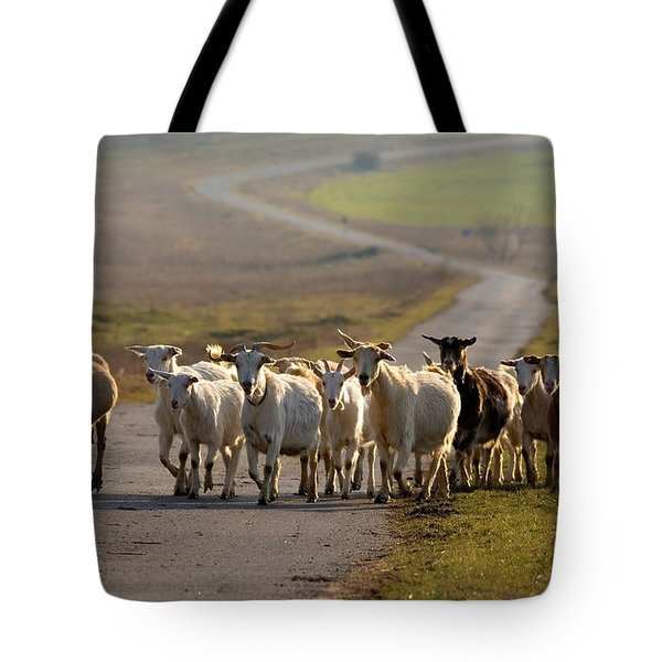 Goats Walking Home Tote Bag