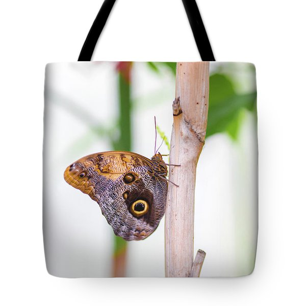 Tote Bag featuring the photograph Gold And Brown Butterfly by Raphael Lopez